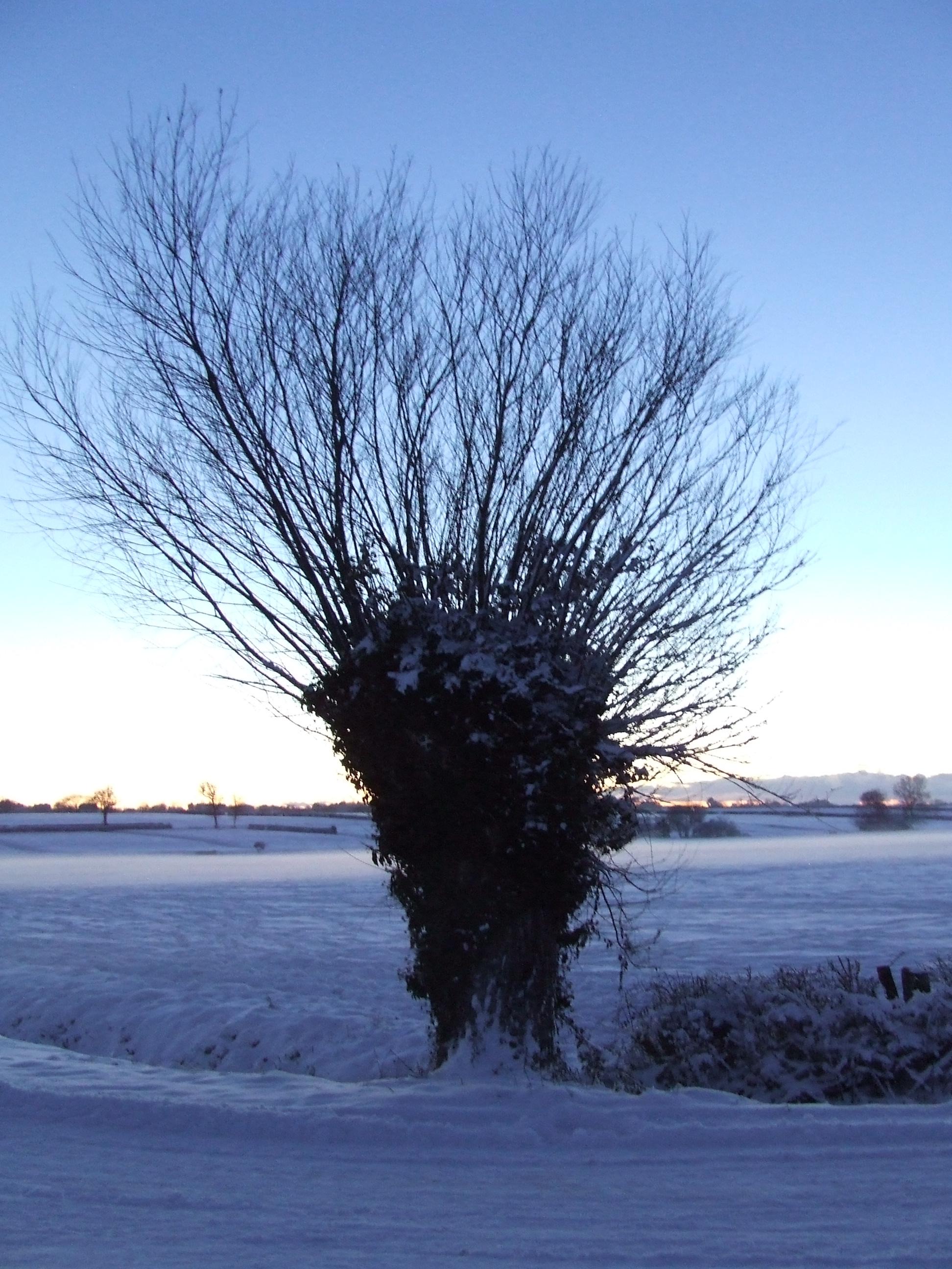 Hedleys_Corner_Catcott_Moor_2010